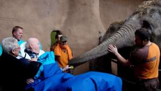 A man in stretcher giving an apple to an elephant