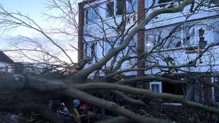 The fallen tree in Hanham