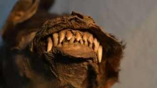 เขี้ยวของลูกสุนัขยังอยู่ในสภาพสมบูรณ์ เพราะถูกฝังในชั้นดินเยือกแข็งคงตัวมานาน 14,000 ปี