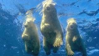 तीन भालु