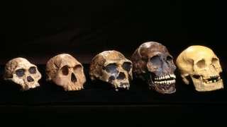 a row of skulls