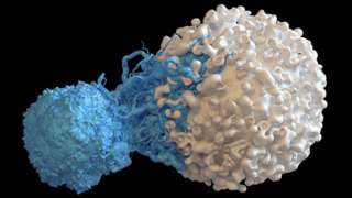 A T-cell attacking a cancer cell