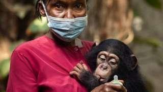 Pooseh Kamaaraa chimpaanzii maatiin duraa du'an ni kunuunsiti