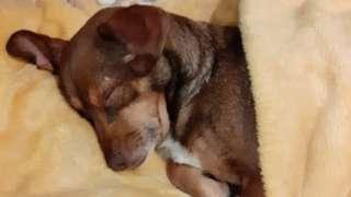 Oskar sleeping in yellow blanket