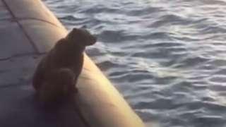 Ведмедиця і ведмежа