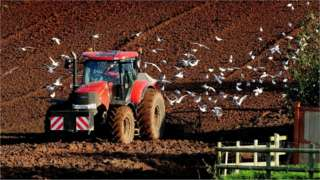 Seagulls follow a tractor ploughing for wheat