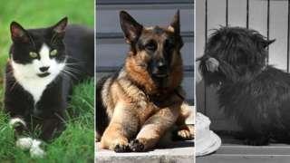 Bill Clinton's cat Socks, Joe Biden's dog Champ, and Franklin D Roosevelt's dog Fala
