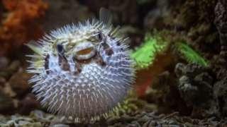 binatang bulat, laut, ekosistem, alam