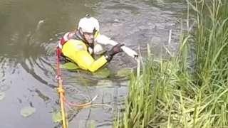 Swan rescued at Pentney Lakes