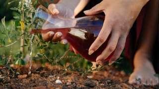 Imagem mostra mulher regando planta com sangue de menstruação. Ritual é conhecido como Plantar a Lua