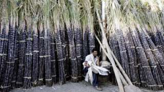 An Indian vendor sits among sugarcane kept at the main wholesale market ahead of celebrations surrounding the festival of Pongal in Bangalore,