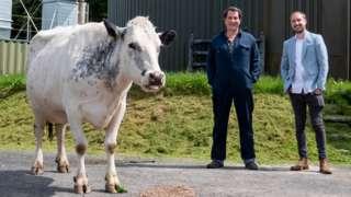 Cow farmer and businessman