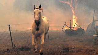 ਆਸਟਰੇਲੀਆ ਦੇ ਜੰਗਲਾਂ ਦੀ ਅੱਗ Australia bushfires