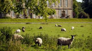 Sheep in the foreground at Wallington with the main building behind