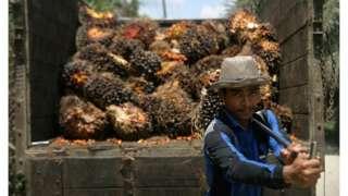sawit, indonesia