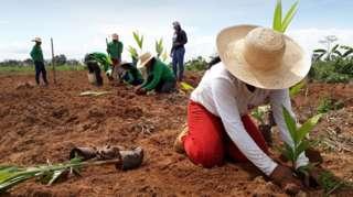 O plantio de mudas também é uma das técnicas usadas para a restauração de paisagens florestais