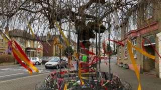 "The ""Umbrella Tree"" in Cowes"