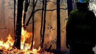 حريق في غابة