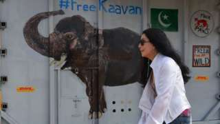 Cher welcomes Kaavan at the airport on Cambodia