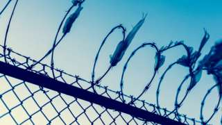 Barbed wire (stock image)