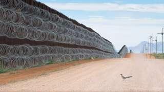 La imagen de Alejandro Prieto de un pájaro correcaminos frente al muro entre EE.UU. y México