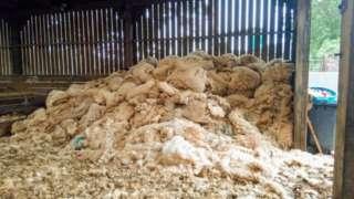 Fleeces in barn