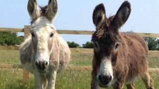 Donkeys at Radcliffe Donkey Sanctuary