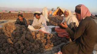 Exports support Afghanistan's agriculture, the country's largest employment sector