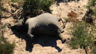 Un elefante muerto de costado.