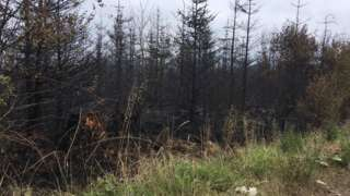 Fire at Tully Forest, County Fermanagh