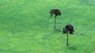 trees brazil