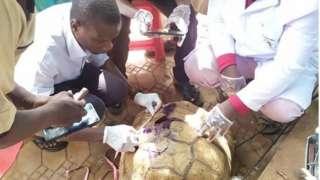 Doctor dey treat di tortoise