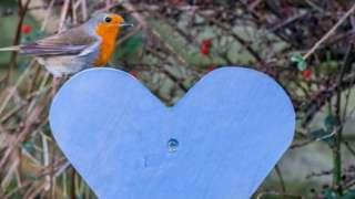 Robin on a blue heart