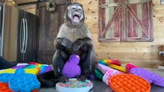 Gaitlyn Rae monkey with pop-its