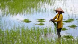 湄公河养育了越南的农民。
