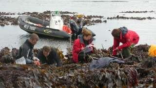 Kelp researchers in Scotland