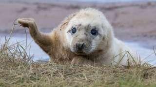 Seal pup at reserve