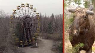 Чорнобиль, що зникає. Панорами Зони відчуження