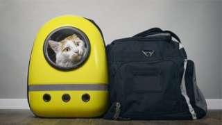 (แฟ้มภาพ) รูปแมวในกระเป๋าสะพาย
