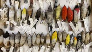 Rows of bird specimen of various sizes and colours