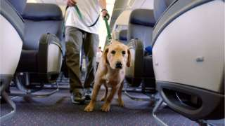 dog on an airline