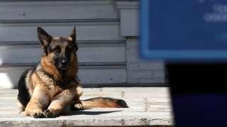 Joe Biden's dog, Champ, lays down on 10 May, 2012