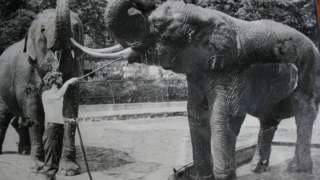 John Partridge washing the elephants