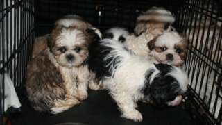 Six puppies in a small cage