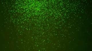 Imagen magnificada de los microbios de hace 101,5 millones de años.