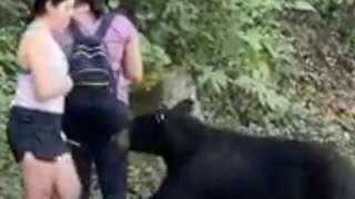 A black bear paws at a women's calf