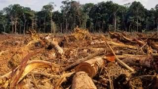 Floresta amazônica com árvores derrubadas