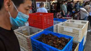 """Most """"wet markets"""", such as this one in Wuhan, do not sell wildlife"""