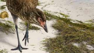 Bird reconstruction