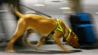 Sniffer dog. File photo
